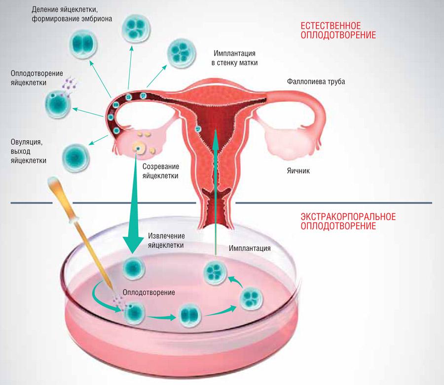 spermatozoidi-gruppi-d-bolshe-normi-forum